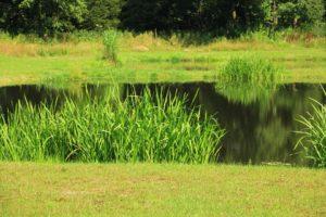 pond-1143326_960_720